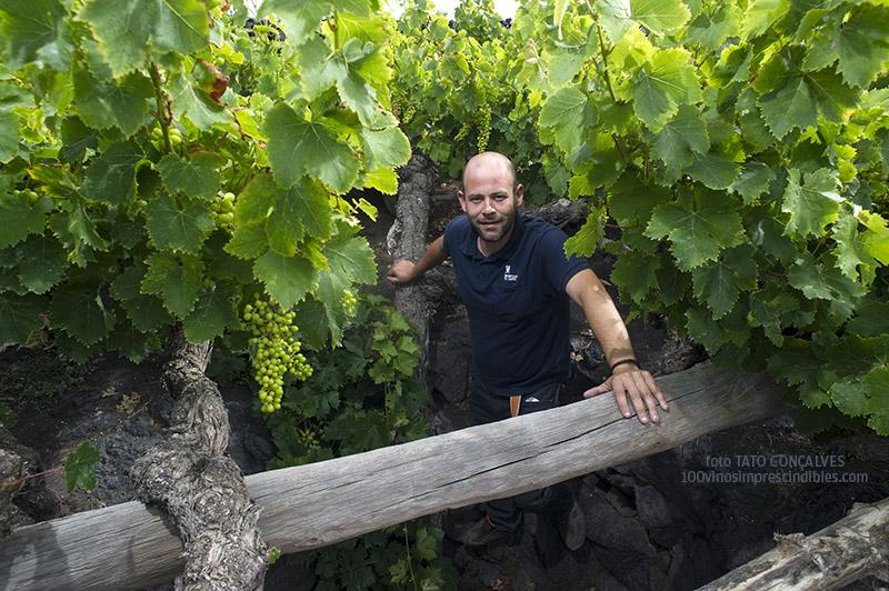 El enólogo Tomás Mesa, en el hoyo de una parra centenaria de uva moscatel./ Foto T. GONÇALVES